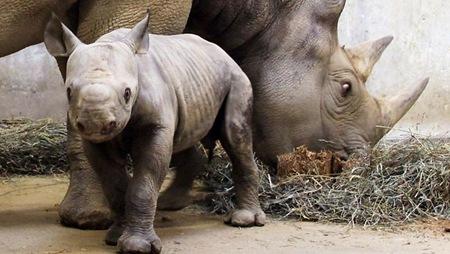 069680-zoo-baby-rhino