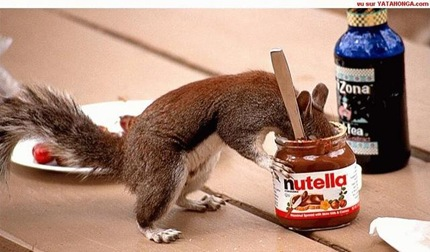 Nutella-squirrel